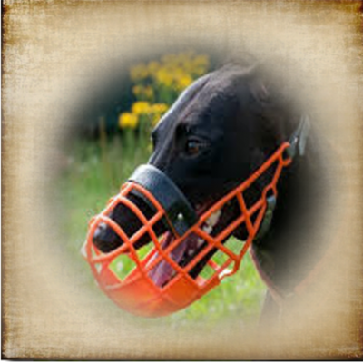 Passgenaue Windhund Maulkörbe