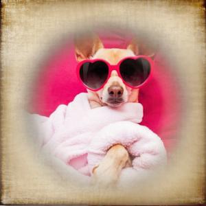 Hundewellness